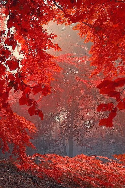 Fall Red's