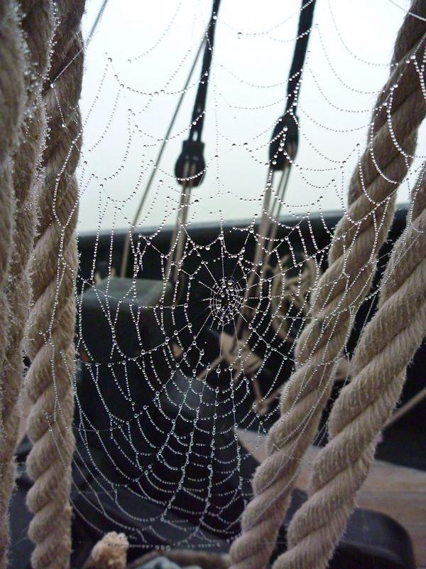 Spiderweb - Photo: Benjamin Warde