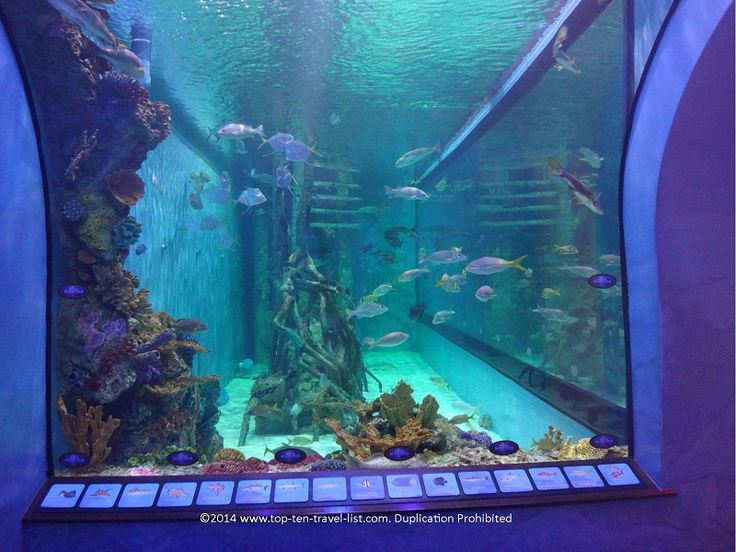 Tank viewing area at Rumfish Grill in St. Pete Beach, Florida