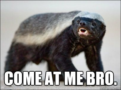 Don't mess with the Honey Badger!