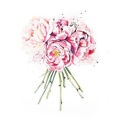 Enya Todd, Illustrator for Cakes, flowers and greetings card