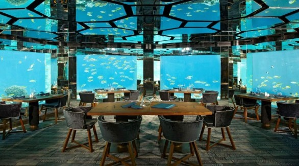 You're the Acquarium in the Restaurant. @Anantara Kihavah Resort (Maldive)