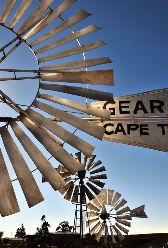 Anemone - Namaqualand - Loeriesfontein, Northern Cape༺ ♠ ŦƶȠ ♠ ༻