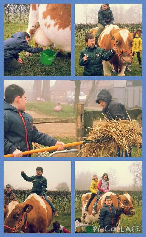 groep5 van #tStartblok   Platte kar,helpen in de stal,koeien melken,helpen bij de konijnen,paardrijden #tienmorgen