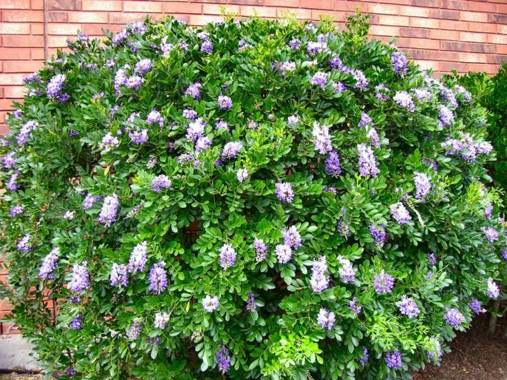 47 Best Images About Shade Plants For Austin Tx Zone 8