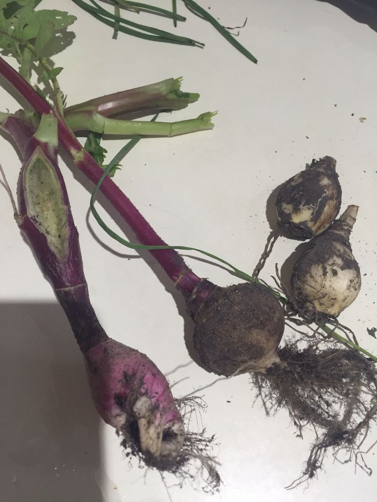Radishes and onions