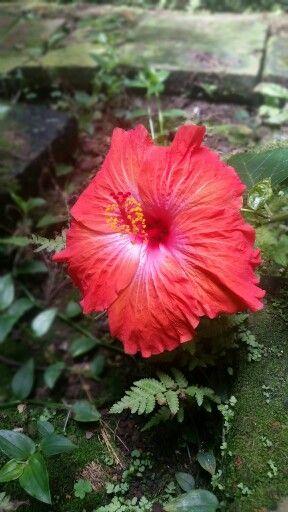 Fusagasugá con sus hermosas flores es considerada la ciudad jardin de Colombia