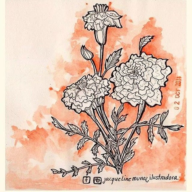#flor de #cempazuchitl #temporadademuertos  #sketch  #watercolor #orange  #draw #diademuertos #chikawonka
