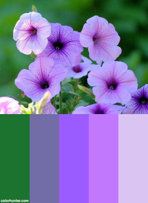 3070 Best images about Colors 8 on Pinterest | Paint ...
