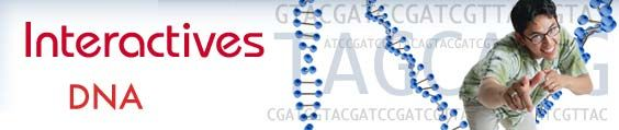 interactive genetics and DNA website
