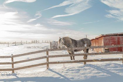 Cold-Weather Horse Care: Tips to Remember - TheHorse.com | Some areas are bracing for more winter weather. Here are a few cold-weather horse care tips to remember. #horsehealth #winterhorsecare