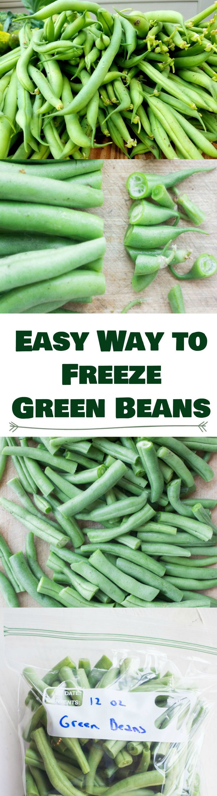 Easy step by step instructions on how to freeze green beans without blanching. These green beans will last up to a year.