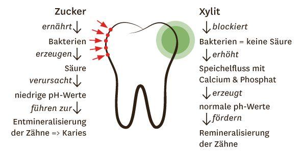 Zahnpflege mit Xylit (Birkenzucker)