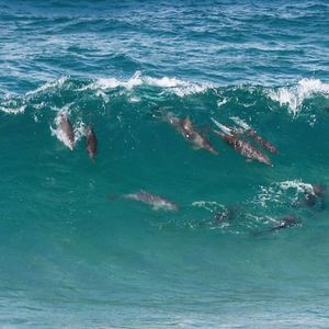 Beautiful creatures  #Fingal #fingalhead #dolphins