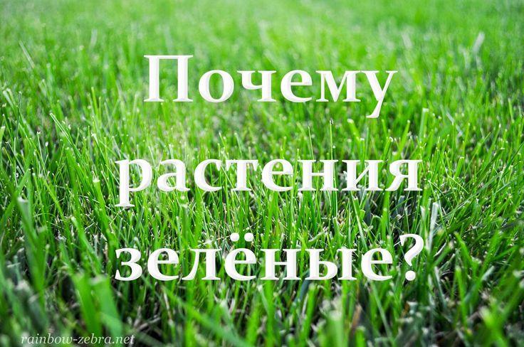 Почему растения зелёные? :: Радужная зебра