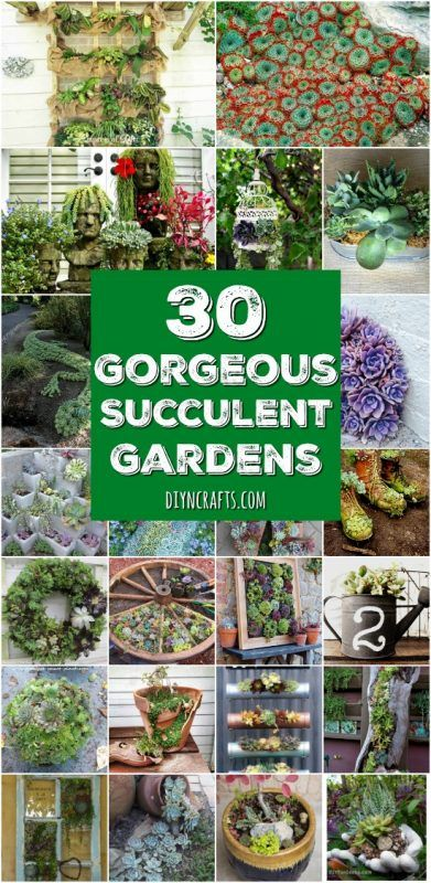 30 Captivating Backyard Succulent Gardens You Can Easily DIY - Curated and Created by DIYnCrafts.com Team