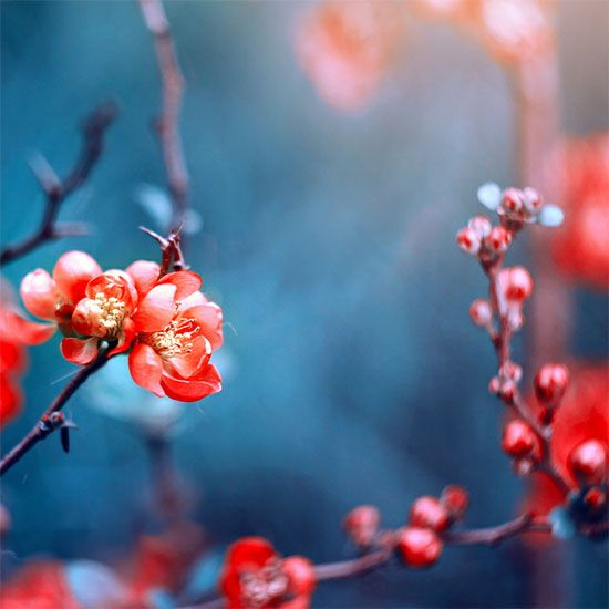 … .. … by kokoszkaa: Beautiful Photo,  Rose Hip, Fun Stuff, Kokoszkaa Deviantart Com,  Rosehip, Floral Photographyuntitl, Happy Photography, Inspiration Images, Color Almost