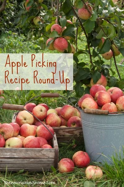 Apple Picking Recipes Round-Up / Keeper of the Home