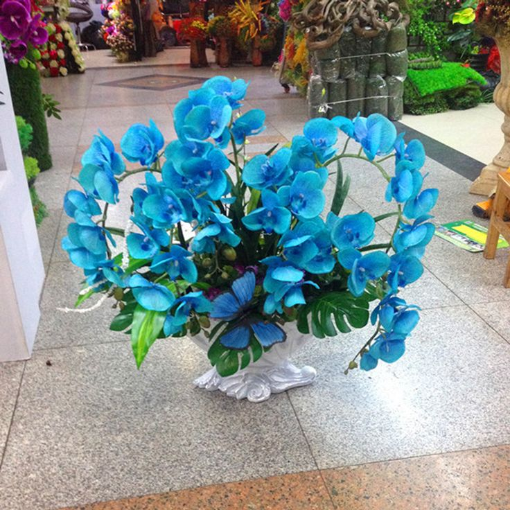 Rare Orchid Bonsai Balcony Flower Blue Butterfly Orchid Seeds Beautiful Garden Phalaenopsis Orchids Seeds  100 PCS ב-Rare Orchid Bonsai Balcony Flower Blue Butterfly Orchid Seeds Beautiful Garden Phalaenopsis Orchids Seeds -100 PCS מתוך בונסאי באתר AliExpress.com | Alibaba Group