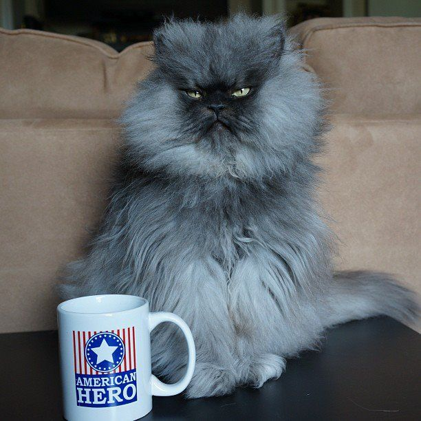Best Colonel Meow Images On Pinterest Crazy Cat Lady Crazy - Garfi is officially the worlds angriest cat