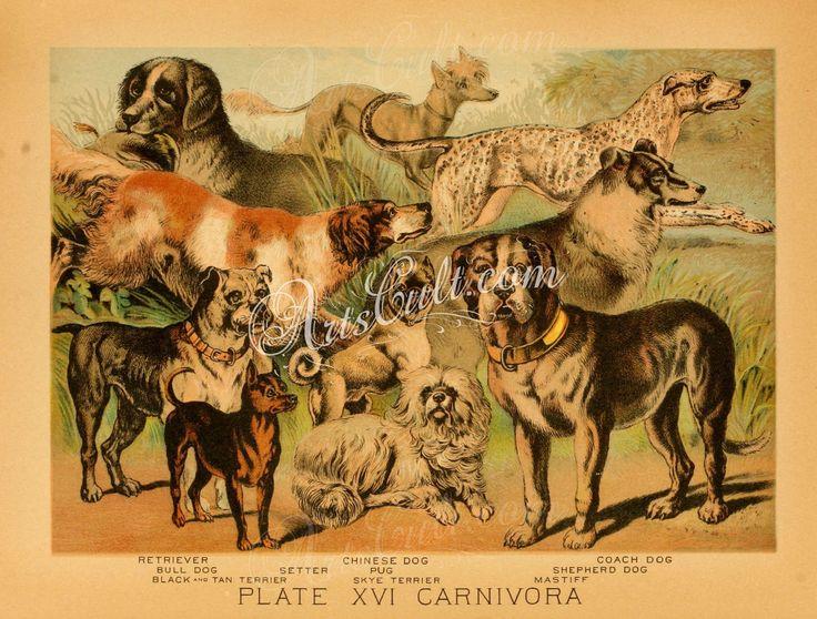 RETRIEVER, BULL DOG, CHINESE DOG, COACH DOG, SETTER, PUG, SHEPHERD DOG, BLACK AND TAN TERRIER, SKYE TERRIER, MASTIFF      ...