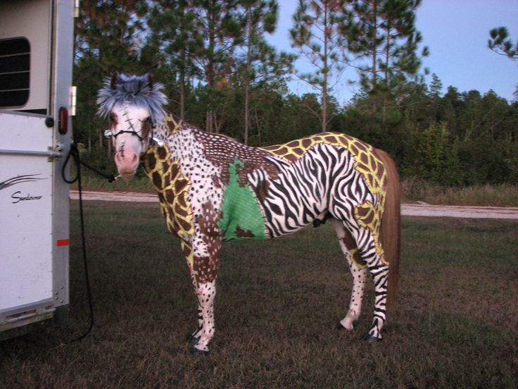 The 17 best images about do it yourself horses on pinterest frankenhorse at muddy boots ranch painted sonic myself what a good pain horse costumes solutioingenieria Gallery