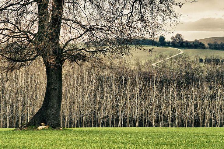 Landscape Focused: landscape, garden design ideas