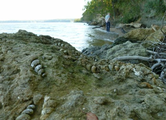 Fossil Hunting along the Potomac River - Maryland and Virginia