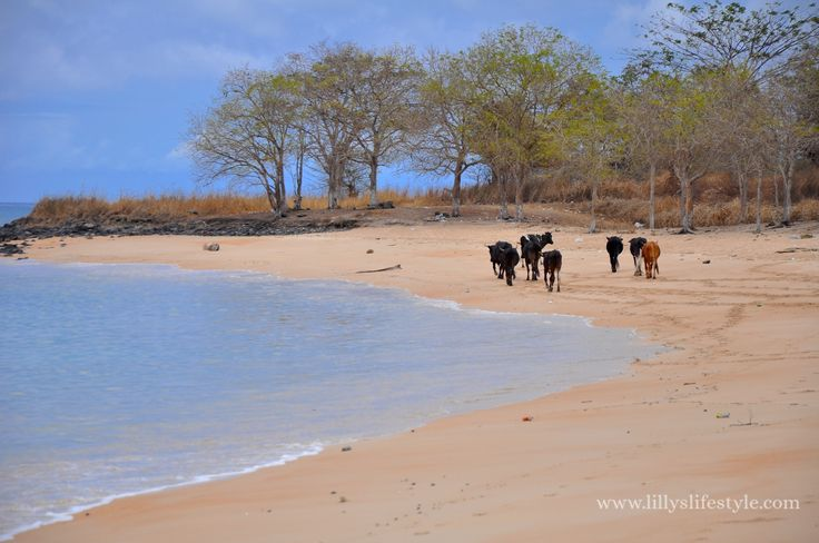 São Tomé, alla scoperta del Nord dell'isola   Lilly's lifestyle http://lillyslifestyle.com/2015/10/30/sao-tome-alla-scoperta-del-nord-dellisola/ #inviaggioconlilly2015 #saotome #lillyslifestyle