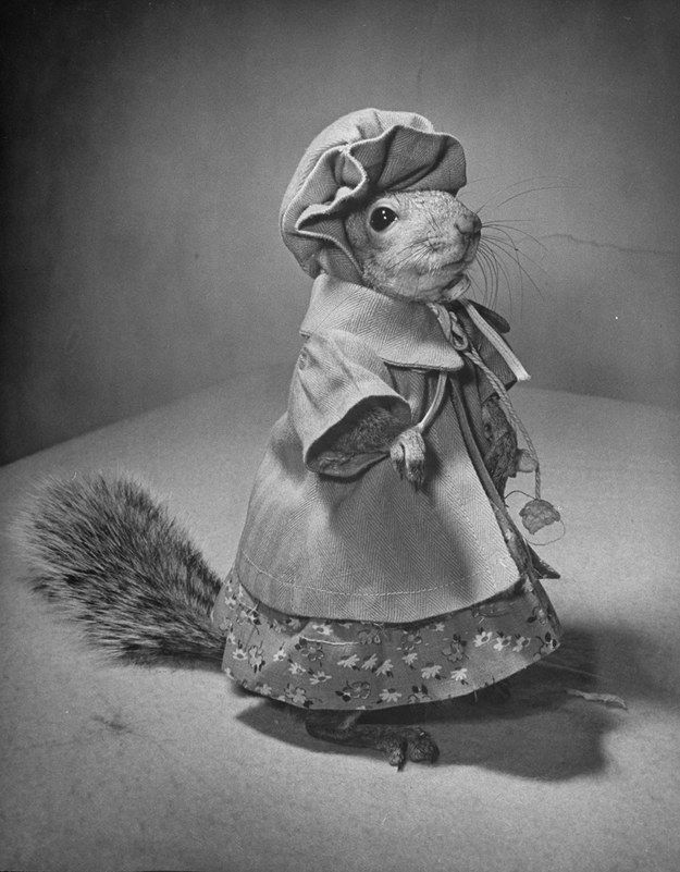 Wearing his hat and coat, Tommy is ready to go shopping. | Tommy Tucker: The Cutest And Most Fashionable Squirrel Of The 1940s