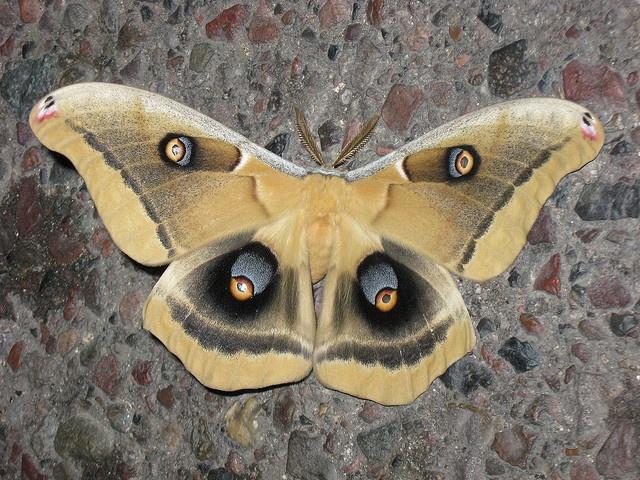 Moth by 89AKurt, via Flickr