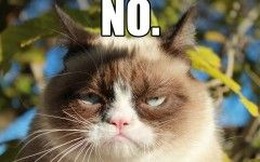 Grumpy Cat Wins Meme Of The Year About