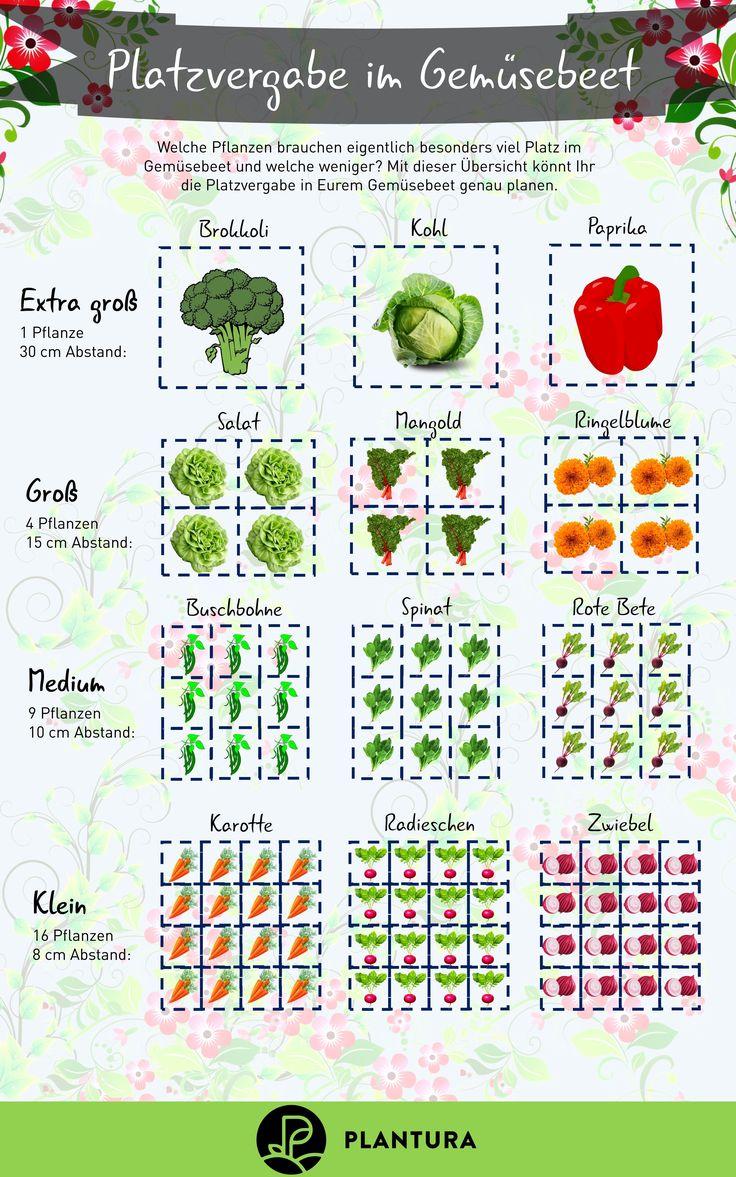 Platz im Gemüsebeet: Welche Pflanzen brauchen eigentlich mehr Platz im Be …   – Gemüsegarten: Gemüse anbauen im Gemüsebeet