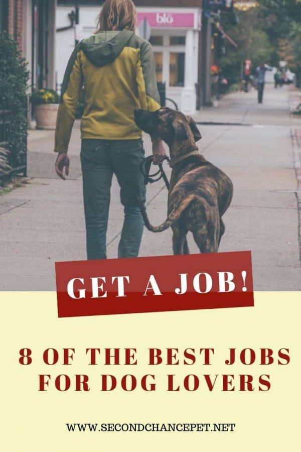 Eight Jobs Working With Dogs Make Money Doing What You Love