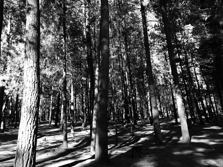 Black And White Forest