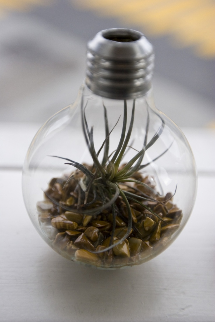 terrarium r cup 39 avec une ampoule pinterest. Black Bedroom Furniture Sets. Home Design Ideas