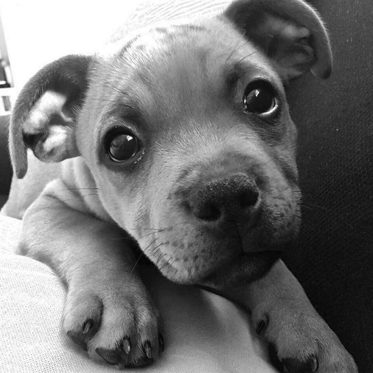 Best Black White Art Images On Pinterest Baby Bulldogs - Powerful and intimate black white animal portraits by luke holas
