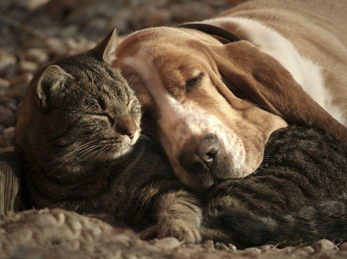 Hier Sind Susse Gute Nacht Bilder Eine Schlafende Graue Katze Und Ein Schlafender Gelber Hund Mit Einem Gelben Hun Hundedecke Susseste Haustiere Hund Und Katze