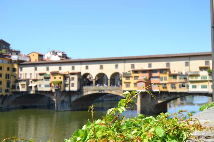 edera con ponte sullo sfondo effetto bokeh