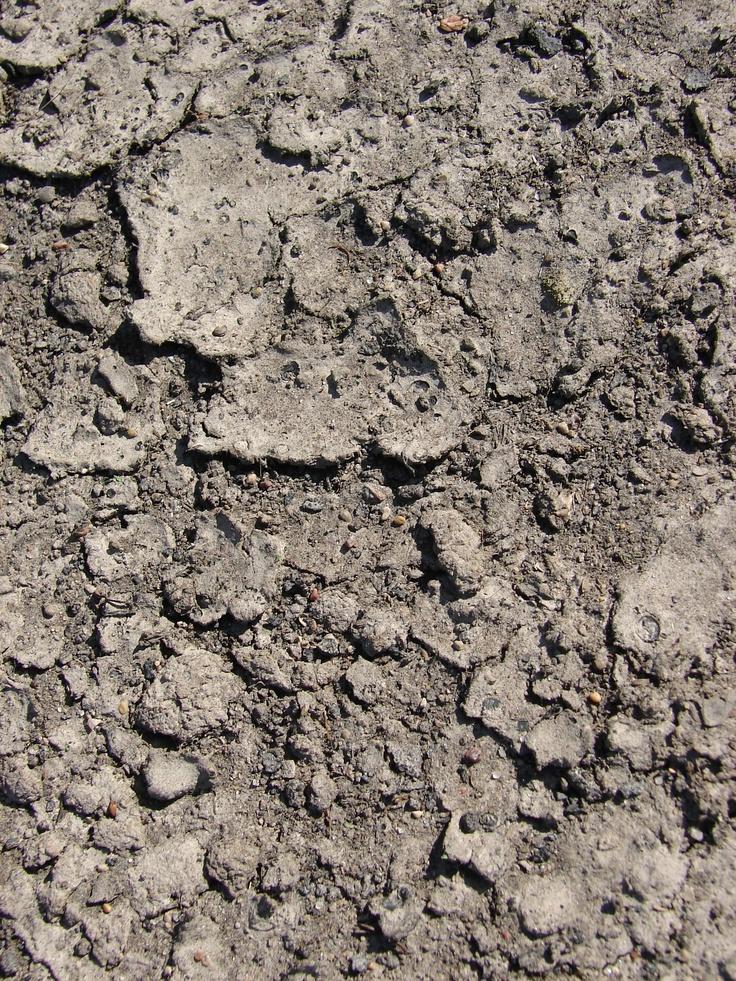 cracked earth dirt