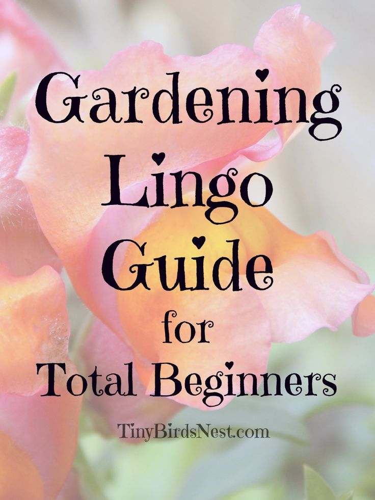 Complete Beginners Guide To Gardening Terminology Urban Garden