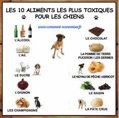 Les 10 Aliments les Plus Toxiques Pour les Chiens Que Tout Propriétaire de Chien Doit Connaître.