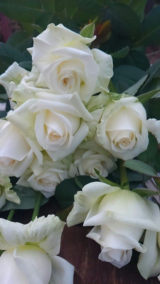 Lovely white roses ❤️