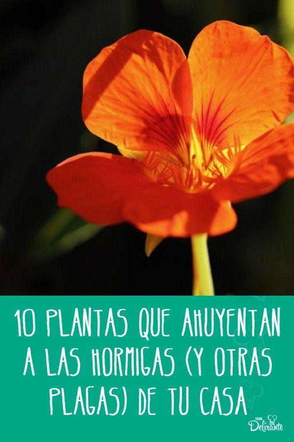 10 plantas que ahuyentan a las hormigas (y otras plagas) de tu casa Hobbies, Ideas Para, Plants, Gardening, Gardens, Vestidos, Natural Ant Repellant, Insects, Camping Foods
