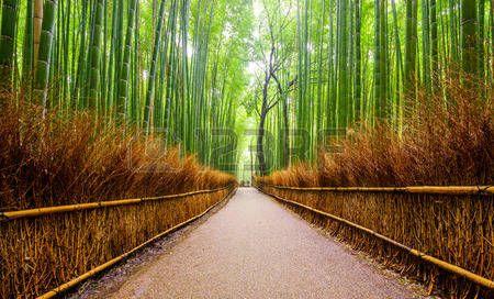 jardin zen: Chemin de la forêt de bambou Arashiyama, Kyoto, Japon