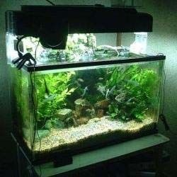 All types of Fish Tanks for Sale. Salt Water, Ascrylic, Saltwater, Bratz, Cheap, Glass, 55 Gallon, Freshwater and more. If your Fish Tanks water is cloudy or has bubbles on top it usually indicates that there are a lot of bacteria in the water. A bacterium is caused from fish waste or too much unused fish food. Also check for dead fish. The first thing to do is to give your fish tank a cleaning. Then change some of your water each day to keep it fresh.