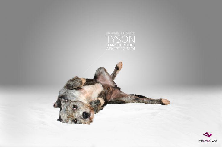 INCROYABLE. Tyson au tapis !