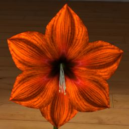 Amarylis pomarańczowy 3D