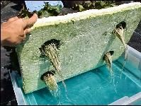 HS943/HS184: Building a Floating Hydroponic Garden