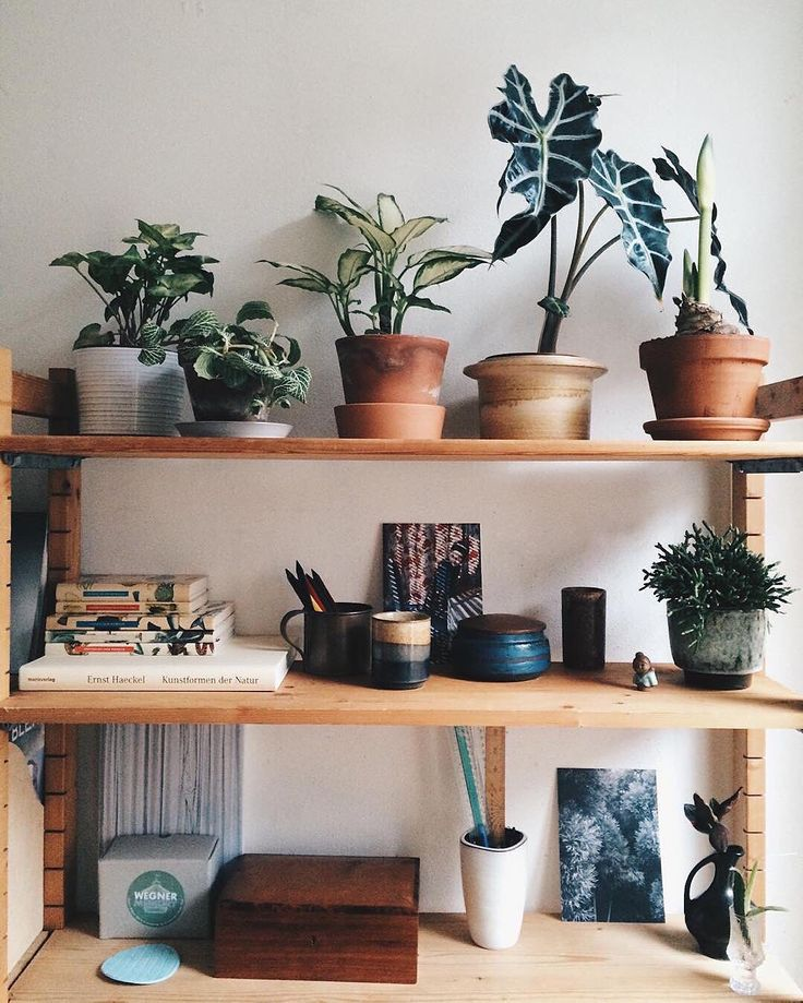 Just love this plant shelfie from the #interiorrewilding feed.